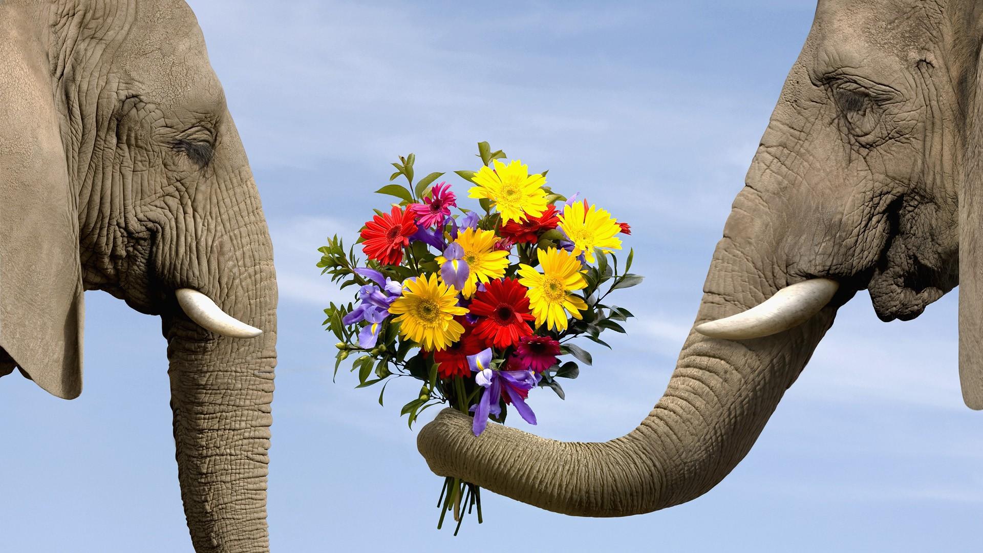 elephant-giving-flowers