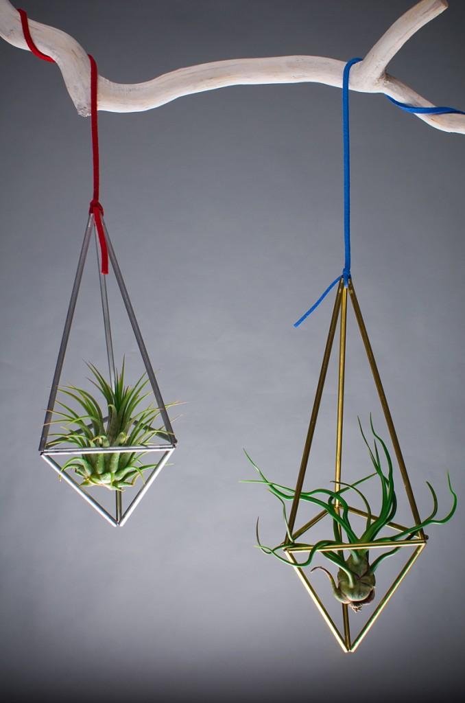 Plante decorative by Aerium